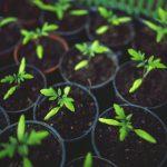 Symbolbild Junge Pflanzen.